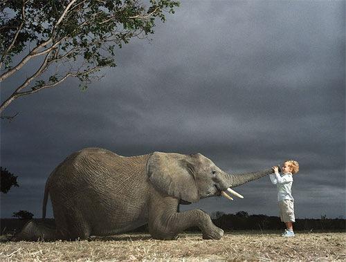 hello-elephant