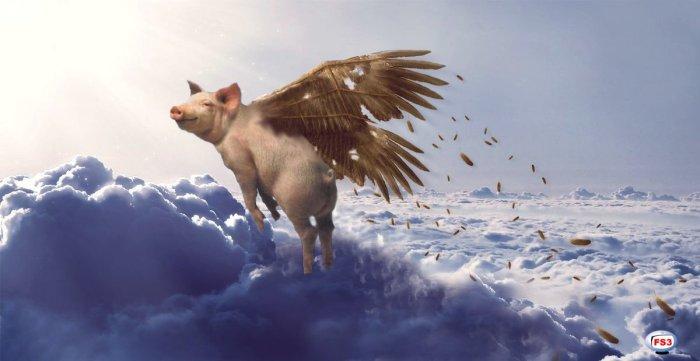 Pigs Fly like Ikarus